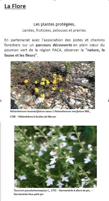 Les plantes protégées. Landes, fruticées, pelouses et prairies.